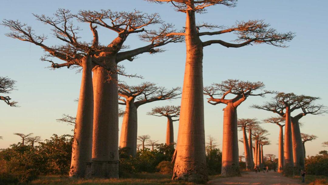 Madagascar / 20200329111200